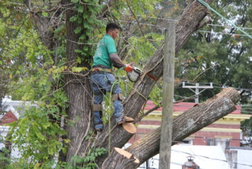 Finding a Reliable Tree Removal Company-Tree Removal Safety